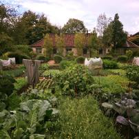kitchen-garden